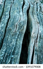 closeup photo of a wooden log with a unique texture