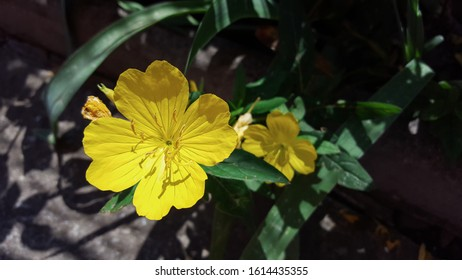 Closeup photo of yellow flower and blurred background. Captured in the garden.