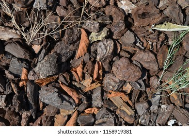 Closeup photograph of Ornamental pine bark chips, dry leaves, and an uprooted field horsetail plant.