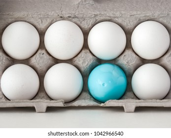 A closeup photograph of a single blue plastic Easter egg nested inside of a carboard egg carton with several real white chicken eggs.