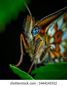 Close-up Photography of Green and Red Butterfly