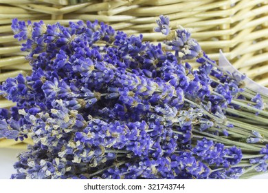 Closeup picture of a bunch of purple lavender flowers