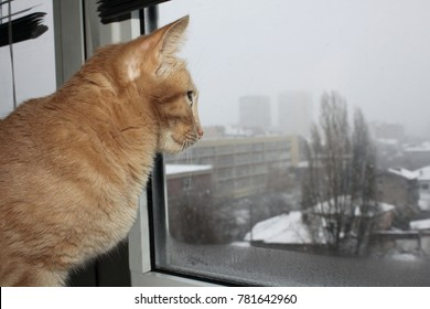 Closeup picture of a cute cat looking through the window
