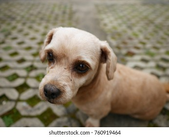 close-up picture of a cute little dog in selective focus and blurred background
