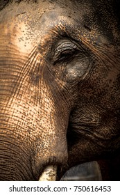 Closeup picture of an elephant.