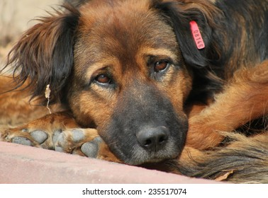 Closeup picture of homeless dog