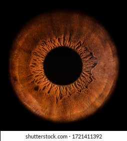 A close-up picture of the iris of the human eye