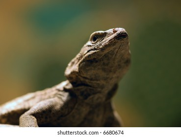 Close-up picture of a lizard