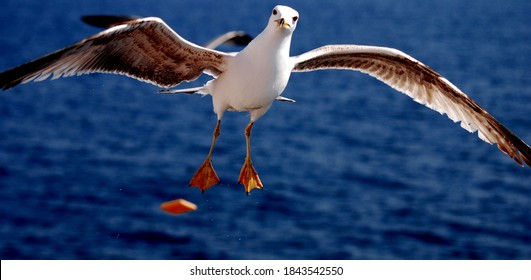 close-up picture of seagull flying over the sea