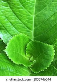 Closeup pictures of green leaves