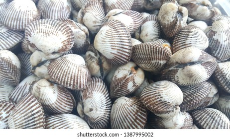 Closeup of pile of fresh Anadara inaequivalvis for sale in market. Fresh raw sea cockles background, sea shells, favorite dish of seafood