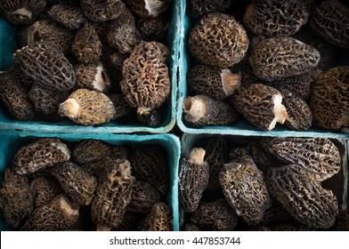 Closeup pile of gourmet morel mushrooms at local farmers market
