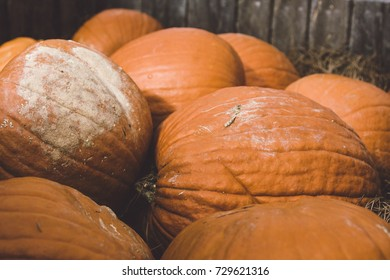 A closeup of a pile of pumpkins for sale.