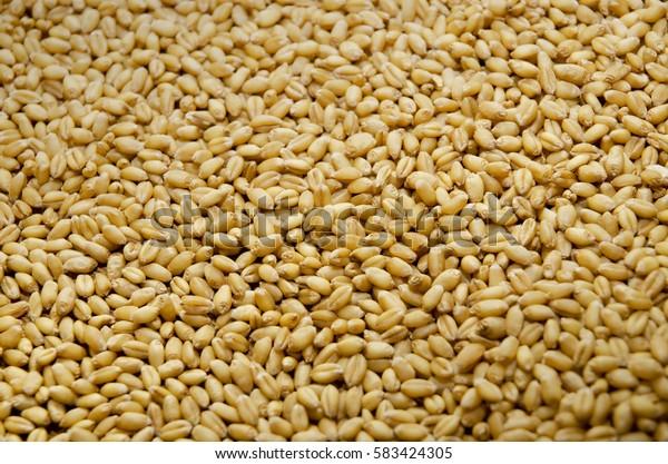 Closeup of a pile of wheat