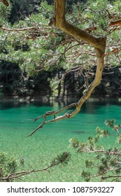 Close-up of pine tree branches with the background of crystal clear turquoise waters' of the Green Lake in Styria, Austria
