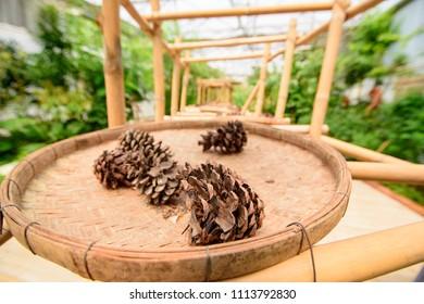 Closeup pinecone on threshing basket