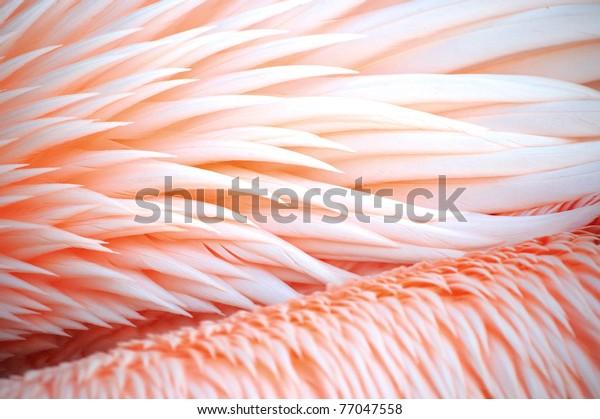 A closeup of pink bird feathers