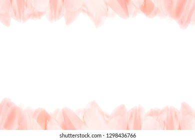 Close-up of pink feathers at the top and bottom of the photo. Horizontal frame. Isolated on white background