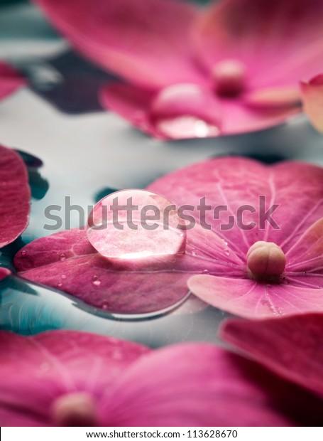 Closeup of pink hortensia flowers floating in water