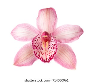 Close-up of pink Orchid flower (Cymbidium)  isolated on white background.