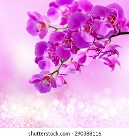 Close-up of pink orchid phalaenopsis. Bouquet of flowers orchids