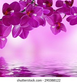 Close-up of pink orchid phalaenopsis. Bouquet of flowers orchids reflected in water