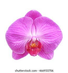 Close-up of pink orchid phalaenopsis isolated on white