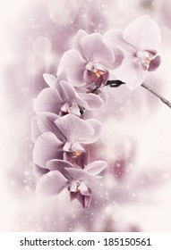 Close-up of pink orchids on light abstract background. Toned image