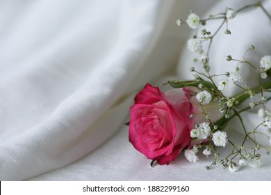 Close-up of a pink rose with gypsophilia on a white surface. Landscape orientation, limited depth of field, copy space