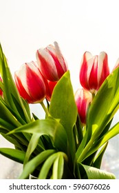 Close-up . Pink tulips are in the vase.