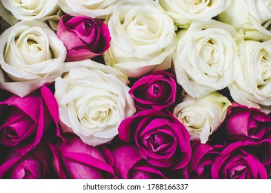 A close-up of pink and white roses