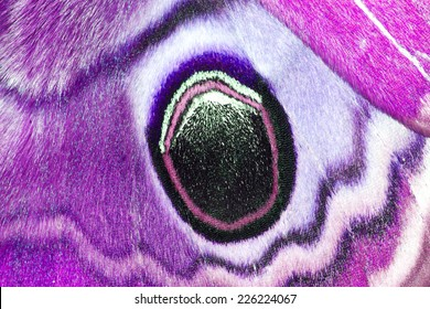 Closeup pink wings butterfly