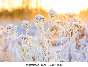 Closeup of plant tops under thick white snow pillow in a warming sunlight at winter