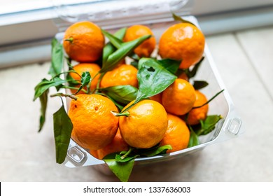 Closeup of plastic box with many satsuma mandarin oranges on floor with vibrant vivid color and green leaves fruit
