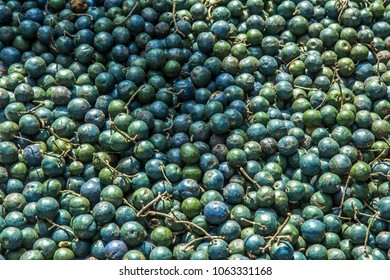Closeup of plenty fresh blue and green berries of Rudraksha tree at the market, which are used for making japa mala