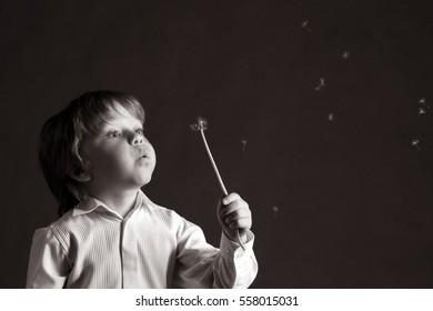 closeup portrait adorable boy with dandelion on a dark background studio