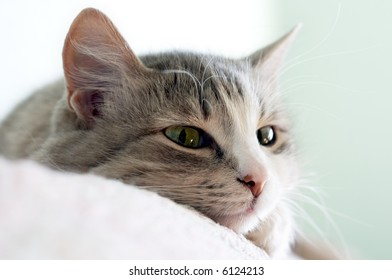 close-up portrait of beautiful kitten lays on sofa (shallow DOF)