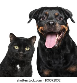 Close-up portrait of cat and dog on white background.