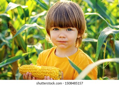 Close-up portrait of cute little child eating boiled yellow sweet corncob in green corn field outdoors. looking at camera Autumn lifestyle. Homegrown organic food. Vegan children nutrition