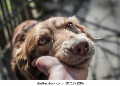 Close-up portrait of cute muzzle dog lying in person's or owner palm on old village yard with wooden fence background.