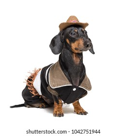 closeup portrait of  dachshund dog with Cowboy costume and western hat isolated on white background.