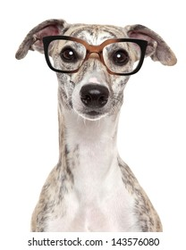Close-up portrait of a dog in glasses, on white background