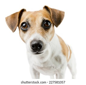 Closeup portrait of a dog looking at the camera
