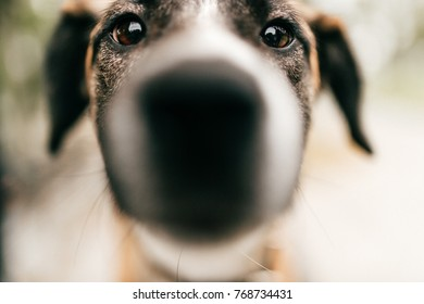 Closeup portrait of dog muzzle. Homless dog expressive eyes look. Depth of filed. Funny pet portrait. Domestic animal face. Mammal puppy looking at camera outdoor in city park. Reflections in eyes.