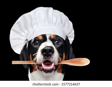 Close-up portrait of a dog wearing chef hat isolated on black