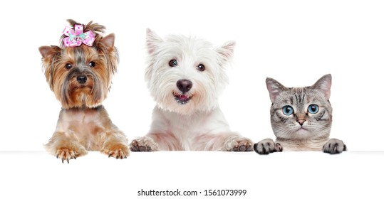 Close-up portrait of dogs and cat holding blank board