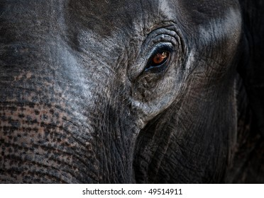 Close-up portrait of an elephant