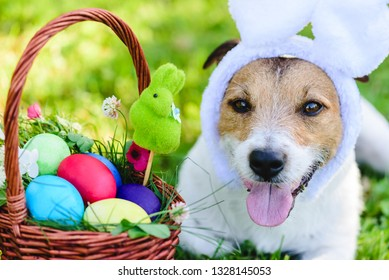 Close-up portrait of funny dog with bunny ears wishing happy Easter