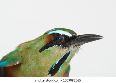 Close-up portrait of green bird isolated on white  studio background