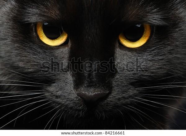 Closeup portrait of a Halloween black cat